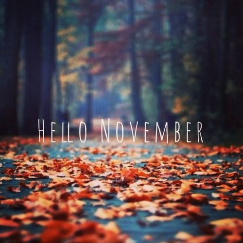 namecheap hello november
